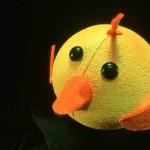 pulcino-giallo
